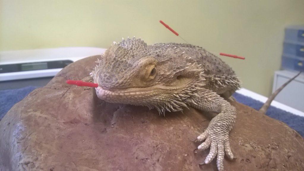 Acupuncture for animals veterinary acupuncture