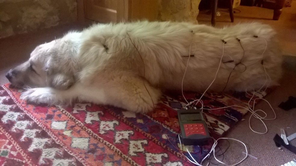 Acupuncture for animals electroacupuncture